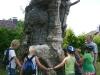 500 Jahre alt wurde der Vogelbaum
