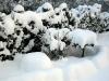 02.05.10 - Winterruhe für Tier und Pflanze