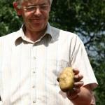 Beste Ware für das Kartoffelfest - Foto: H. Westerhoff